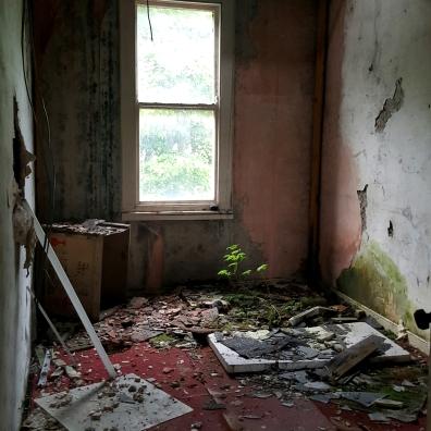 Abandoned Cemetery Florists, Burke Bros (Dublin, Ireland) – Derelict World Photography - Lainey Quinn