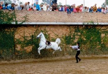 1987 May - Peforming Horses at Notre Dame 3-L